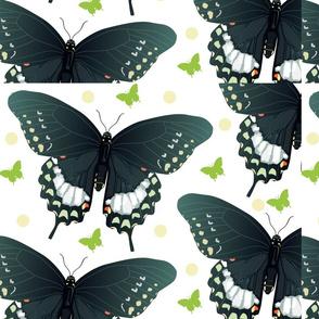 swallowtailart