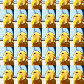 yellow chick blue sky