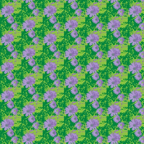 Asters 4-color