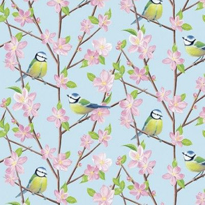 Blue tits and blossom