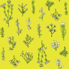 Plant Bits   Chartreuse