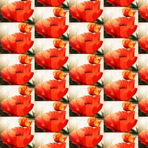 poppies red gold-sunburst