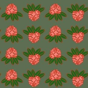 catawba rhododendron coral green gray