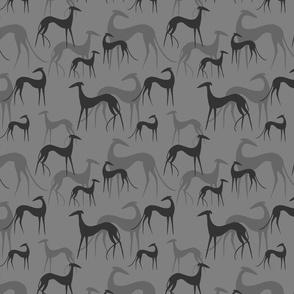 Sighthound grey