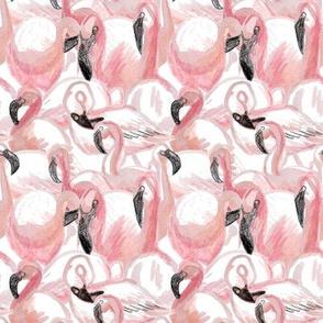 All the flamingos