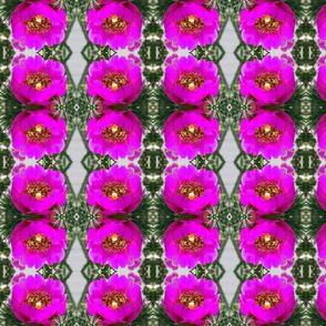 Cactus Flower rad plaid