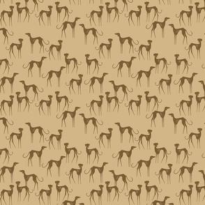 Azawakh brown