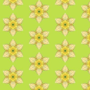 Spring Daffodil Abstract