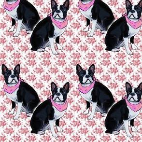 Boston Terrier Pink