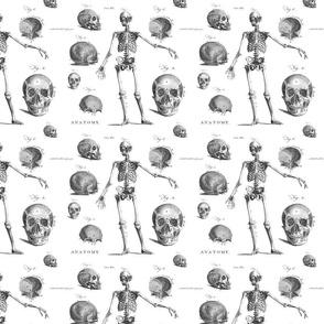 Antique Gothic  Skeleton Anatomy Fabric for Halloween Decor