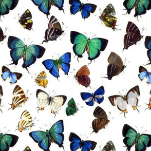 Vintage Green and Blue Butterflies