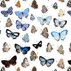 Vintage Blue Butterflies