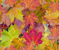 Fantastic Fall Leaves