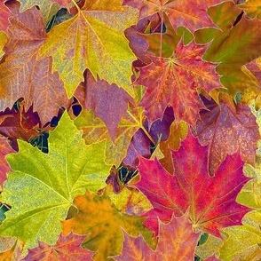 Fantastic Fall Leaves  -small