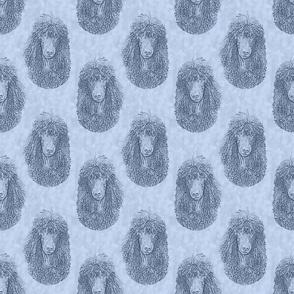 Irish Water Spaniel faces - blue