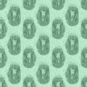 Irish Water Spaniel faces - green