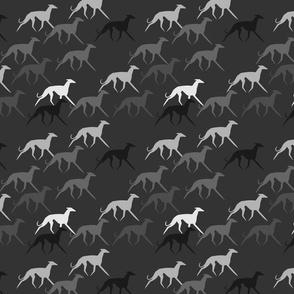 Sighthounds grey