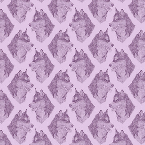 Siberian Husky head sketch - lavender