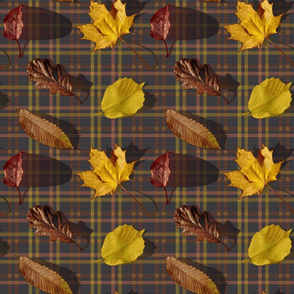 Leaves and Tartan