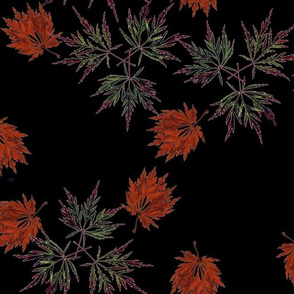 Japanese Maples Medium