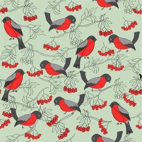 cute robins in winter