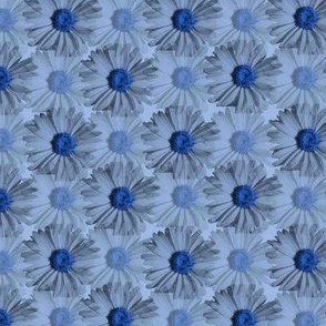 Field of Daisies - blue
