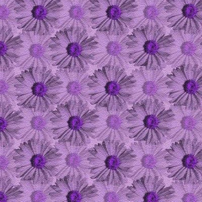 Field of Daisies - lavender