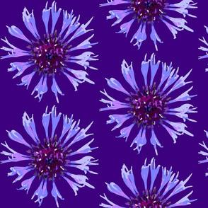 Lapis lazuli cornflower (large)