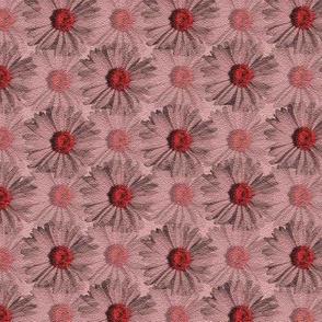 Field of Daisies - peach