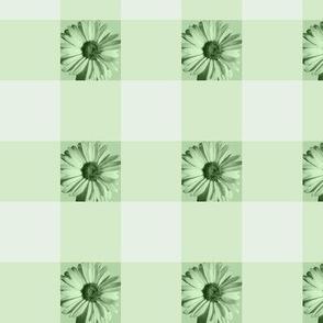 Gingham Daisies - green