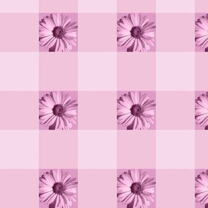 Gingham Daisies - rose