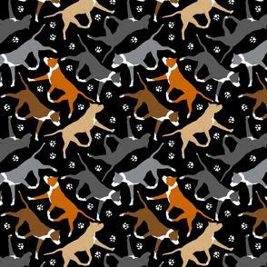 Trotting American Staffordshire Terriers - black