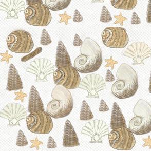 Sea shells / Lt.