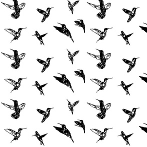 Hummingbirds Black and White