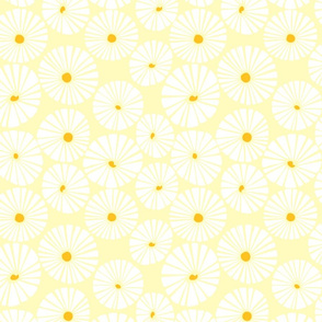 happy daisy (floral candy)