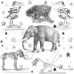 Animals, Black and White Vintage Illustrations