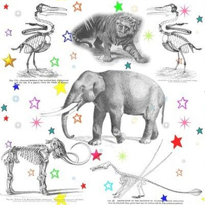 Museum Animals Vintage Skeletons Rainbow Stars