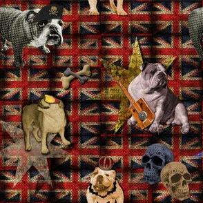 English Bulldog goes British