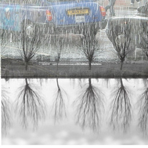 rainy London trees