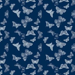 Indigo Butterfly