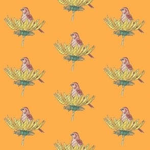 Sunflower Bird Orange