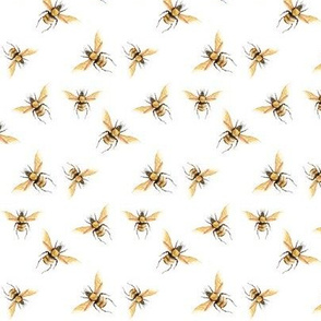 Honey Bee Golden, Standard Scale