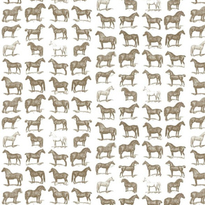 Vintage Horse Breed Poster Wall Paper