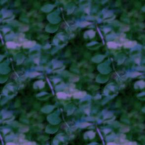 Twilight in Alice's Garden
