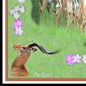 Impala in the grass