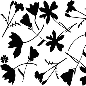 Black and White Wildflowers