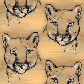 Walnut Cougar