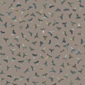 shark teeth on warm grey