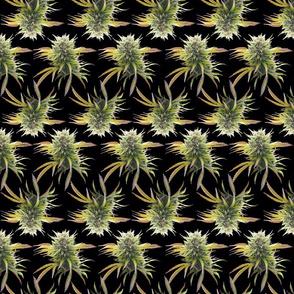 Marijuana Buds on Black