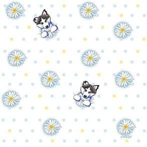 Alaskan Malamute Daisy